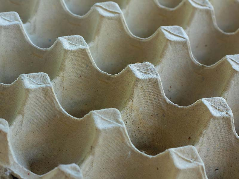 Food Packaging - Moulded Fibre